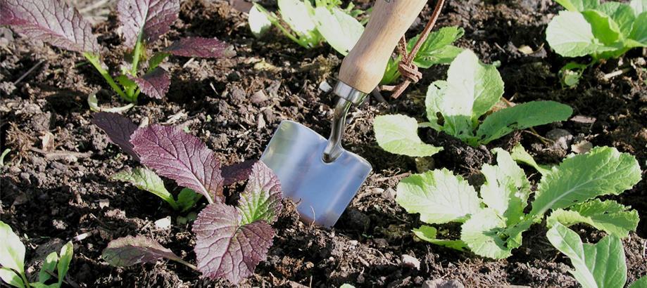 Header_for-the-gardener-vegetable-garden-stainless-steel-hand-trowel