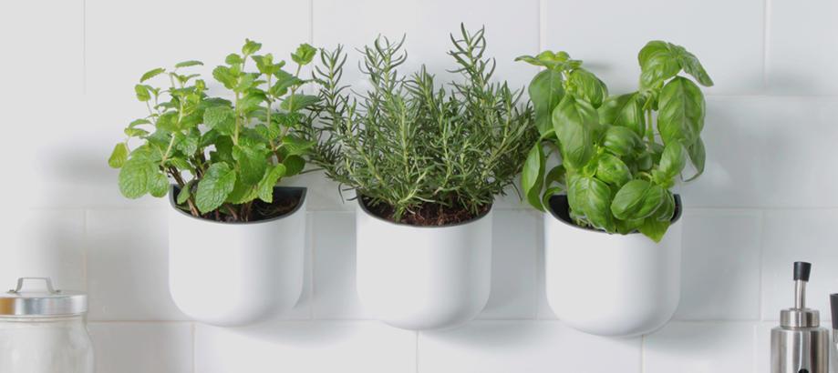 Header_plant-stuff-houseplants-okidome-planters