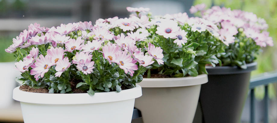 Header_plant-stuff-gifts-under-10-urban-balcony-planters