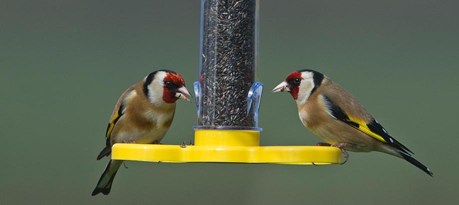 Header_garden-friends-bird-food-goldfinch-feeder