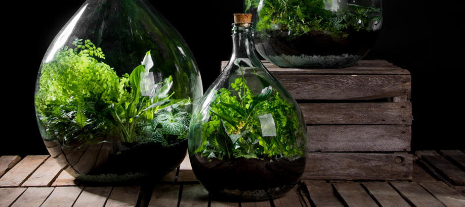 Header_garden-art-and-decor-terrarium-large-bottle-terrarium