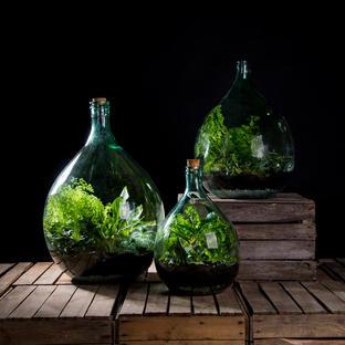 Large Bottle Terrariums