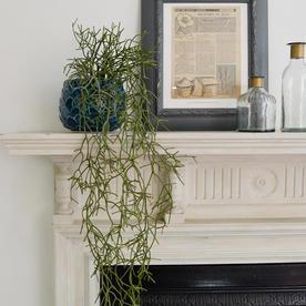 Faux Potted Rhipsalis Cactus Plant