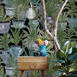 Echeveria Feature Wallcovering