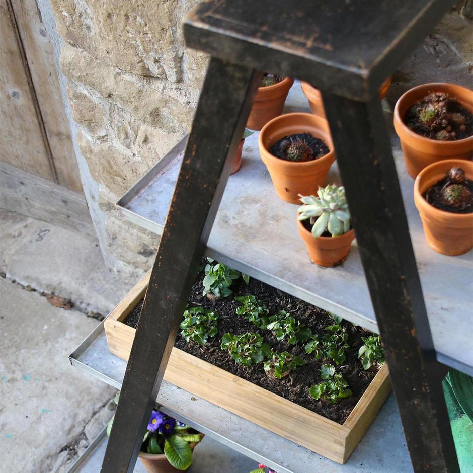 Plant Display Ladder
