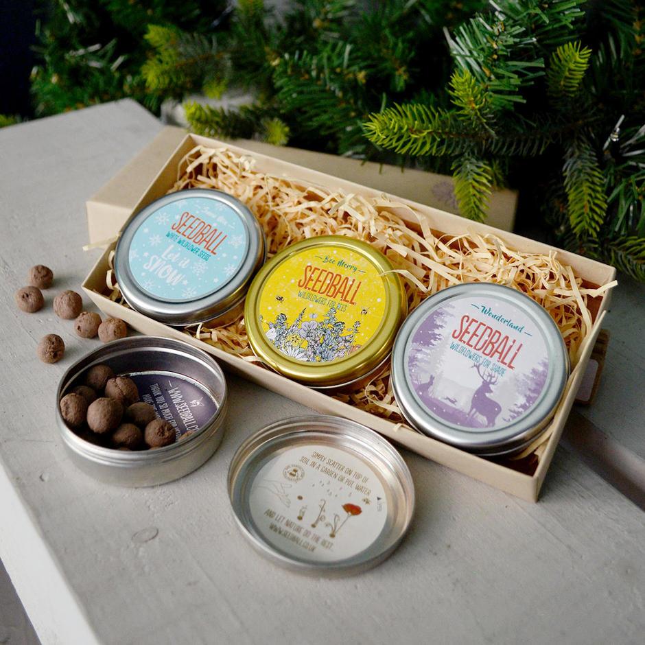 Festive Fun Seed Tin Collection Gift Box