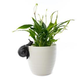 Snail Plant Pot  Decoration