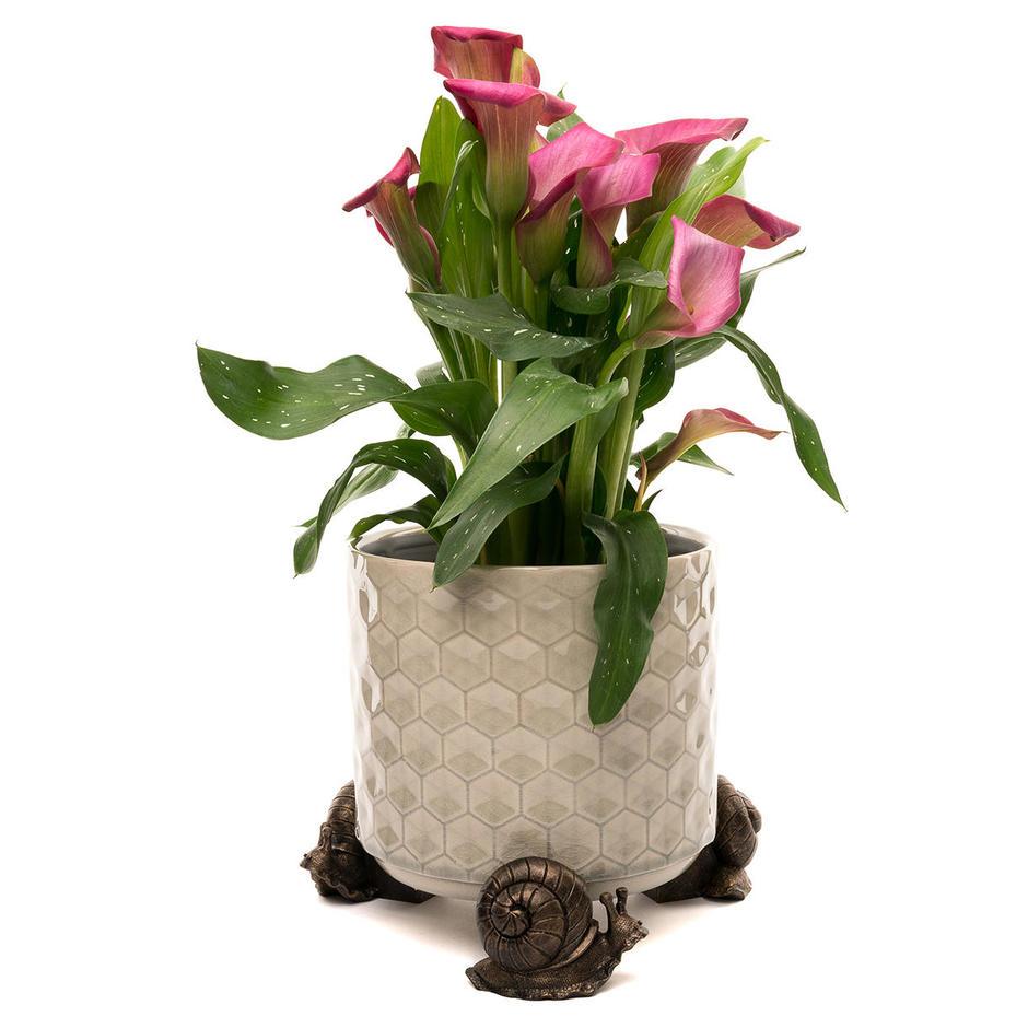 Snail Plant Pot Feet - Set of 3