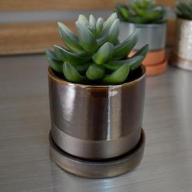 Contemporary Mini Pot with Saucer