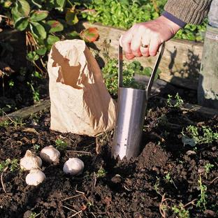 Hand-held Bulb Planter