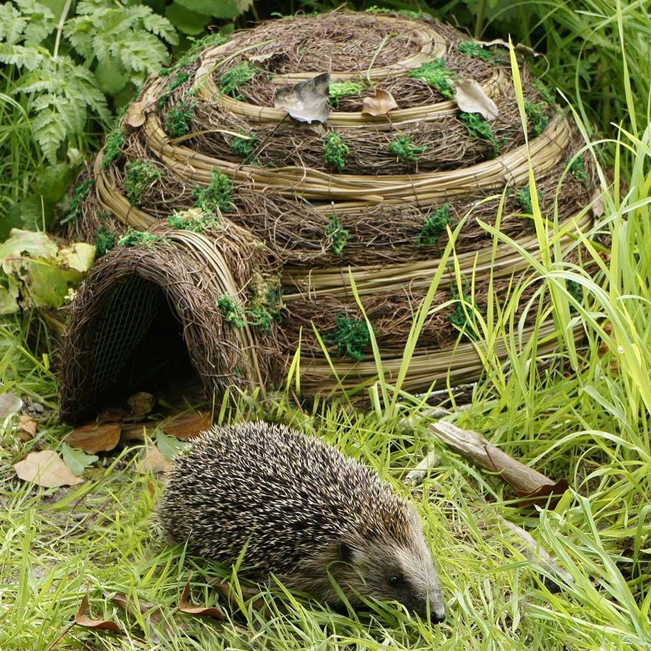 Hedgehog Igloo