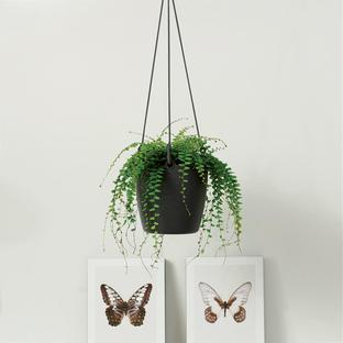 Urban Hanging Planter