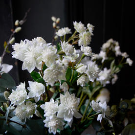 Faux White Astrantia