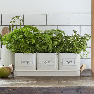 Herb Pot Tray with Leather Handles
