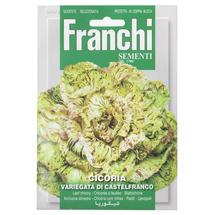 Chicory Castelfranco Varigated Seeds