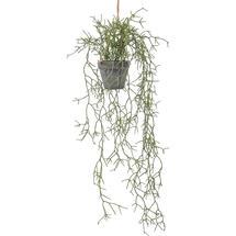 Faux Rhipsalis Cactus Plant in Pot