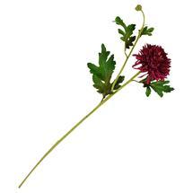 Chrysanthemum Stem Deep Red