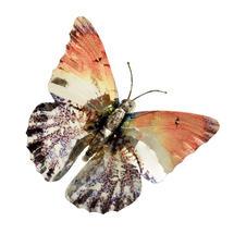 Set of Foil Butterflies