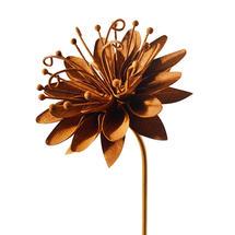 Rusty Passion Flower