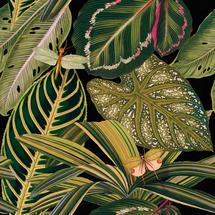 Wallpaper Amazonia