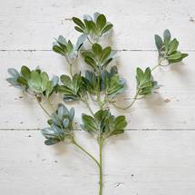 Icy Olive Leaf Spray