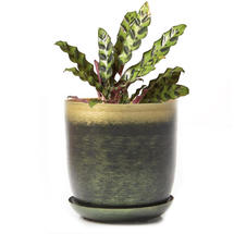 Lustre Planter with Saucer - Forest & Gold