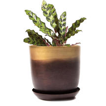 Lustre Planter with Saucer - Mahogany & Gold