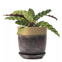 Lustre Planter with Saucer - Brown & Gold