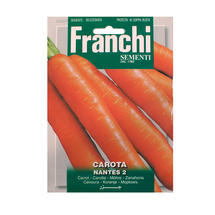 Carrot Nantese Di Choggia