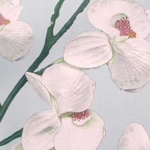 Lilywhite Notecards Pack of 5